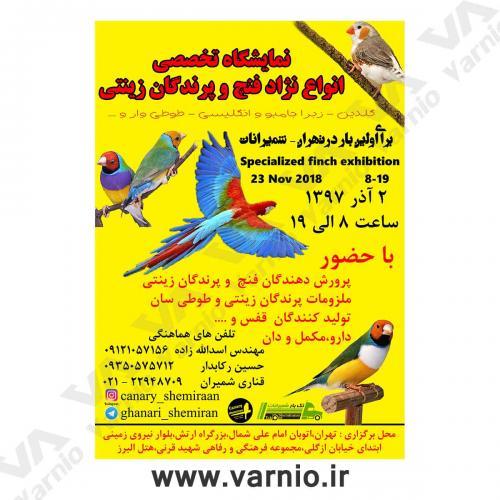 نمایشگاه-پرندگان-زینتی  پوستر